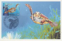 Carte  Maximum  1er  Jour    NOUVELLE  CALEDONIE    Aquarium  De  NOUMEA     TORTUE   à  GROSSE  TETE   2002 - Turtles