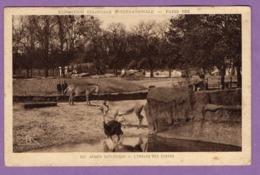 Paris 1931  Exposition Coloniale Internationale Jardin Zoologique L Enclos Des Zebres - Carte Non Ecrite - - Expositions