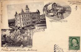 236 / Greetings From San Antonio, City Hall, Spanish Dagger, Mexican Burro Cart 1905 - San Antonio