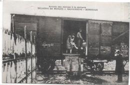 33 - BORDEAUX : Sécherie De Morues J. SAUVEROCHE, Arrivée Des Morues à La Sécherie, - Bordeaux
