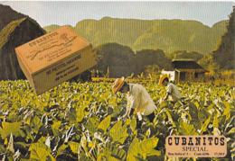 .Publicité  CUBANITOS SPECIAL. (Cuba TABAC.CIGARE Petits Havane) Message De La Seita Suite Grève ....*PRIX FIXE - Advertising