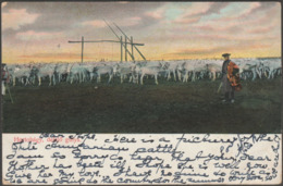Delelő Gulya, Hortobágy, C.1900-05 - Trenkler Levelezőlap - Hungary