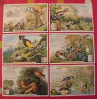 6 Chromo Liebig : Dans Le Monde Des Oiseaux. 1900. S 651. Chromos. - Liebig