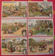 6 Chromo Liebig : Fleurs Odorantes. 1911. S 1019. Chromos. - Liebig