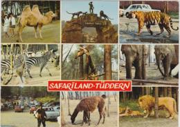 HEINSBERG SAFARILAND TUDDERN ( Dromadaire Singes Tigre Zebre Girafe Elephant Lion ...) - Heinsberg