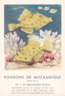 CHROMO - Biscottes Clément - Poisson - Stephanolepis - Mozambique - Publicité Marinol - Laboratoire La Biomarine - Animals