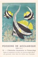 CHROMO - Biscottes Clément - Poisson - Heniochus - Mozambique - Publicité Marinol - Laboratoire La Biomarine - Animals