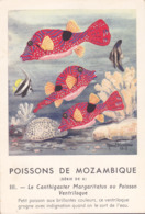 CHROMO - Biscottes Clément - Poisson - Canthigaster - Mozambique - Publicité Marinol - Laboratoire La Biomarine - Animals