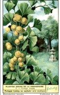CHROMO LIEBIG  PLANTES ISSUES DE LA PREHISTOIRE  GINKGO BILOBA - Liebig