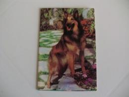 Dog Chien Cão Sociedade Protectora Dos Animais Portugal Portuguese Pocket Calendar 1985 - Klein Formaat: 1981-90