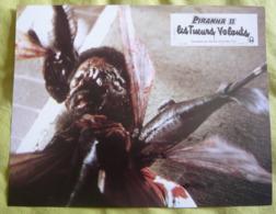12 Photos Du Film Piranha II, Les Tueurs Volants (1981) - Albums & Collections