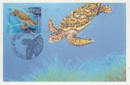 Carte  Maximum  1er  Jour    NOUVELLE  CALEDONIE    Aquarium  De  NOUMEA     TORTUE   BONNE   ECAILLE   2002 - Turtles