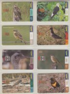 URUGUAY 2000 BIRDS WOODPECKER HAWK FINCH SNIPE OSTRICH LAPWING MARSHBIRD - Otros