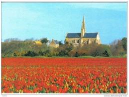 Carte Postale 29. Saint-Jean-Trolimon  La Chapelle N.D. De Tronoën Et Les Champs De Tulipes Trés Beau Plan - Saint-Jean-Trolimon