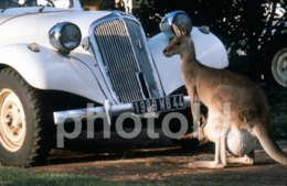 1994 KANGOROO CITROEN TRACTION CAR VOITURE FRANCE 35mm PRESS DIAPOSITIVE SLIDE Not PHOTO No FOTO B4917 - Dias