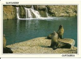 Santander Mini Zoo Parque De La Magdalena Leones Marinos . - Tierwelt & Fauna
