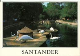Santander Parque De Mataleñas. Estanque De Patos Y Cisnes. - Vögel