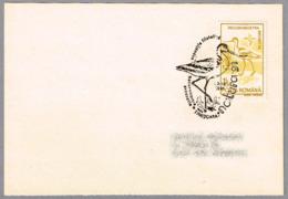 AVOCETA. Recurvirostra Avossetta. Avocette élégante. Timisoara 1995 - Obliteraciones & Sellados Mecánicos (Publicitarios)