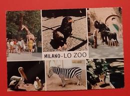 Cartolina Milano - Lo Zoo - 1980 - Milano (Milan)