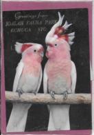 GREETINGS FROM JOHALA FAUNA PARK ECHUCA VIC - Australia