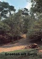 Belgium Groeten Uit Retie Woods Trees Landscape - Belgique