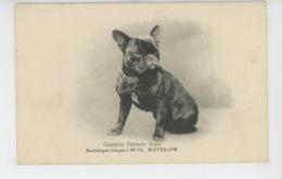 CHIENS - DOG - Bouledogue Français - Champion Stanmore Argus - Cani