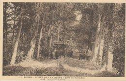 17 - RONCE LES BAINS - Forêt De La Coubre - Allée Du Barrachois - La Tremblade