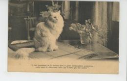 CHATS - CAT - Jolie Carte Chat - Cachet Au Dos De LA SOCIÉTÉ ROYALE PROTECTRICE DES ANIMAUX A GAND - BELGIQUE - Katzen
