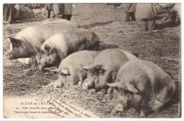 SCÈNE DU CENTRE (19) - COCHONS - PORCS - Une Famille Bien Nourrie - ELEVAGE - AGRICULTURE - Ed. Bessot Et Guionie, Brive - Allevamenti