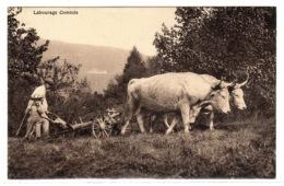 ATTELAGE - LABOURAGE COMTOIS (25) - AGRICULTURE - BOEUFS - Equipaggiamenti