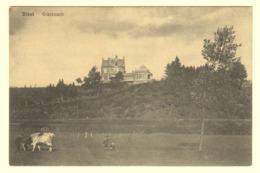 A0883[Postkaart] Diest / Grasbosch - Diest