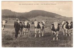 MONTAGNES DU DOUBS (25) - Les Boeufs Au Paturage - ELEVAGE - AGRICULTURE - Allevamenti