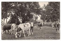 MONTAGNES DU DOUBS (25) - Un Paturage - BOEUFS - ELEVAGE - AGRICULTURE - Allevamenti