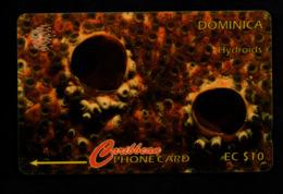 Dominique - $ 10 - Hydroids - ???? (verso Voir Scan) - Dominica