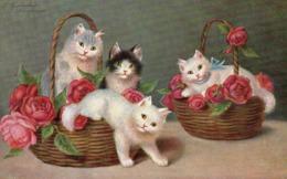 Cpa Chat, Serie 1169 - Gatos