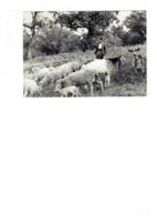Grande Cpm - Photographe Helmut Krackenberger - Berger Moutons Agneau Chèvre Cloche Chien - Allevamenti
