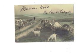 Cpa - Homme Troupeau De Chèvres - Chèvre - 1902 -  PRH - Allevamenti