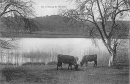 France 15 Cantal  L'etang De MADIC   Vache       Barry 606 - Other Municipalities