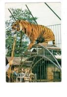 Cpm Zoo Du Bois D'Attilly - OZOIR LA FERRIERES - 77 - Photogravure L.M. - Spectacle - Tiger