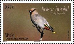 ST PIERRE ET MIQUELON SPM 2014 Bird Birds Bohemian Waxwing Animals Fauna MNH - St.Pierre & Miquelon
