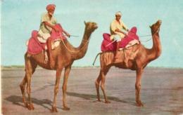CT-03007- CAMEL RIDERS CLIFTON BEACH KARACHI - Pakistan