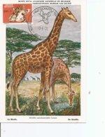 Girafes ( CM De Belgique De 1961 à Voir) - Giraffes