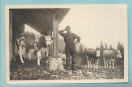 CPA 39 Carte Photo Elevage Vaches Berger Et Son Troupeau De  Scènes De Vaches Pâturage Dans Le Haut Jura   Non Voyagée - Allevamenti