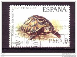 Espagne, Spain, Tortue, Reptile, Turtle - Turtles