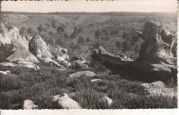 77B02R1 CPSMPF 77- 614. ENVIRONS DE BOURRON MARLOTTE  LES ROCHERS  VSE1950 - Autres Communes