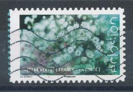 1711 (o) Eclosion De Fleurs - France