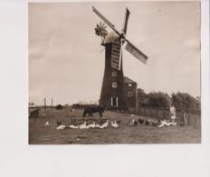 LINCOLNSHIRE  CROFT MILL WAINFLEET WINDMILL WINDMOLEN Windmühle MOULIN A VENT +- 17*14CMFonds Victor FORBIN (1864-1947) - Lieux