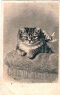 Chat  - Cat - Katze - Poes Met Strik - Katten