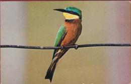 Bird Vogel Oiseau Petit Guêpier D'Afrique Birds (Merops Pusillus) Stamp Tibre Rwanda Republique Rwandaise Afrique Africa - Vogels