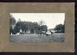Groesbeek - Huize Greosbeek - Koe Paard - 1908 Grootrond - Niederlande